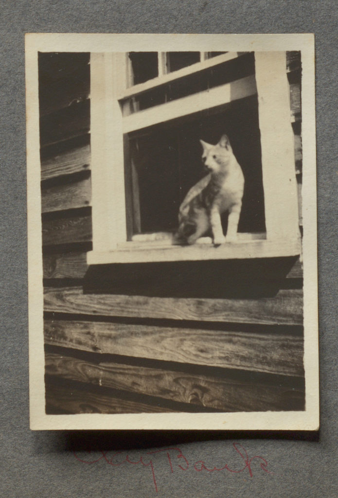 Photograph of cat on window